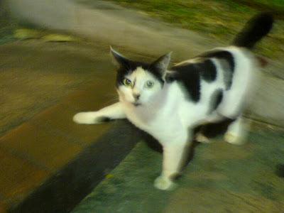 Singapore Cats Photo 4