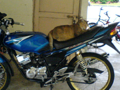 Cat in a Motorcycle