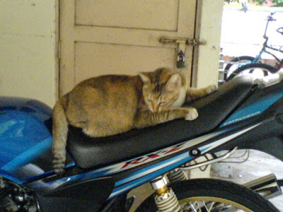 Cat in a Motorcycle 2