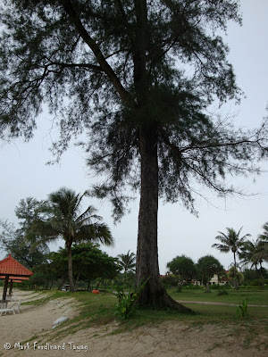Bintan Lagoon Resort Beach Photo 7
