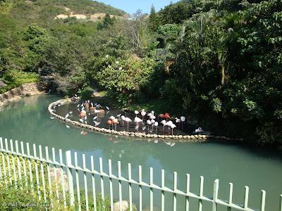 Ocean Park Hong Kong Photo 3
