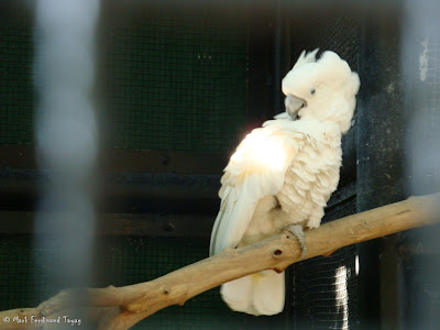 Ocean Park Hong Kong Aviary Batch 3 Photo 8