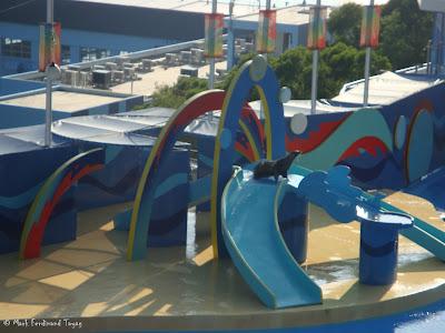 Ocean Park Live Dolphin Show Photo 2