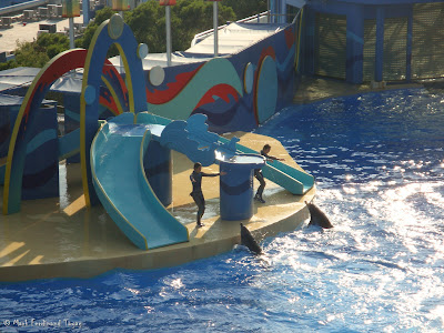 Ocean Park Live Dolphin Show Photo 6