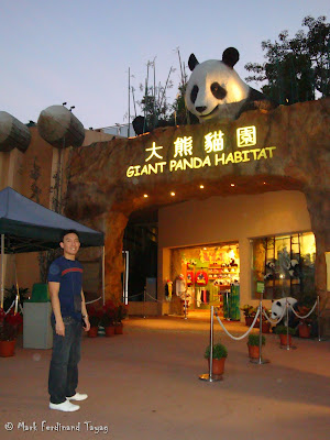 Giant Panda Habitat Ocean Park Hong Kong Photo 11