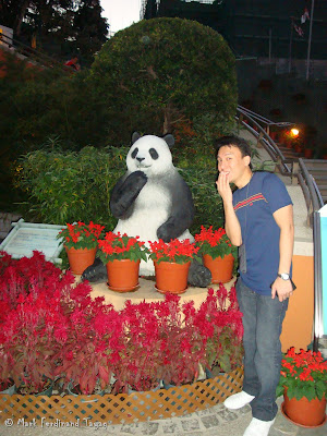Giant Panda Habitat Ocean Park Hong Kong Photo 12