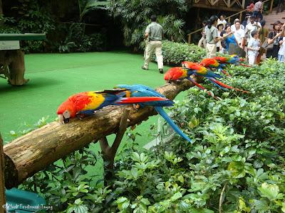 Jurong Bird Park - Birds n Buddies Show Photo 11