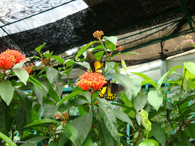 Butterfly Park, Kuala Lumpur Photo 3