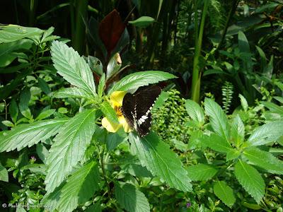 Butterfly Park, Kuala Lumpur Photo 14