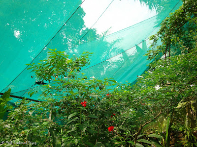Butterfly Park, Kuala Lumpur Batch 2 Photo 3