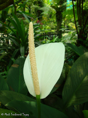 Butterfly Park, Kuala Lumpur Batch 3 Photo 1