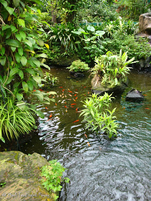 Butterfly Park, Kuala Lumpur Batch 3 Photo 5