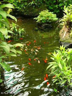 Butterfly Park, Kuala Lumpur Batch 3 Photo 6