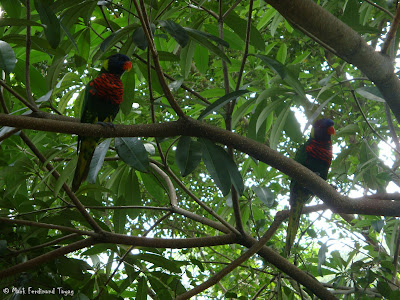Jurong Bird Park - Lory Loft Photo 15