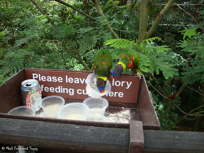 Jurong Bird Park - Lory Loft Batch 2 Photo 6