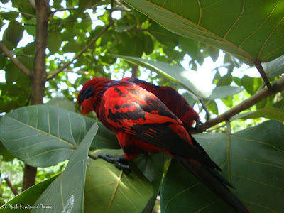 Jurong Bird Park - Lory Loft Batch 2 Photo 12
