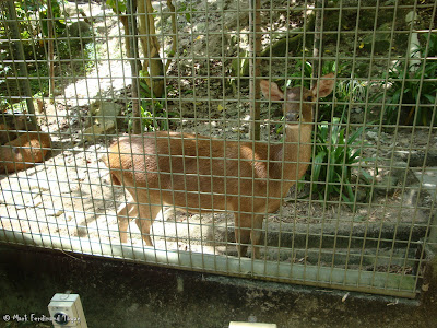 Sunway Lagoon - Wildlife Park Photo 3