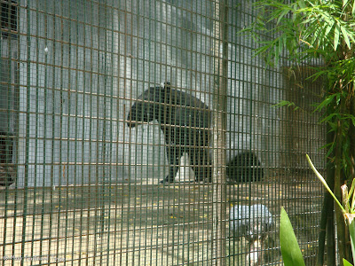 Sunway Lagoon - Wildlife Park Photo 6
