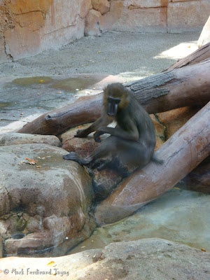 Sunway Lagoon - Wildlife Park Batch 2 Photo 1