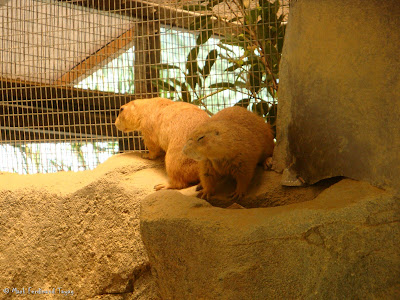Sunway Lagoon - Wildlife Park Batch 2 Photo 12