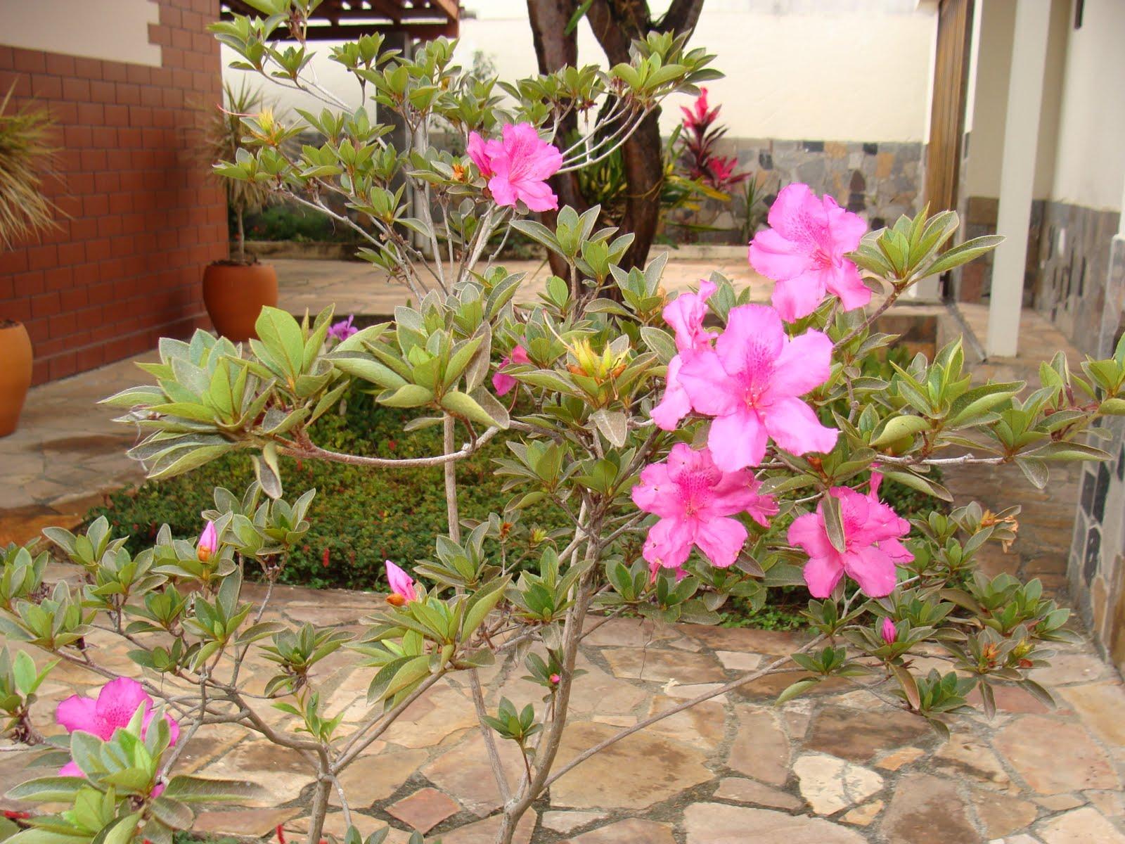 flores para jardim de inverno:Jardim Natureza: Flôres de Inverno
