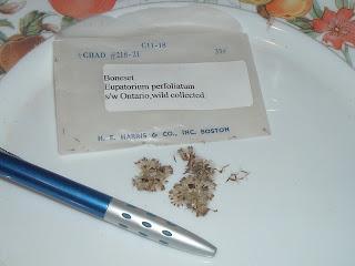 p[Photo: Eupatorium perfoliatum seeds.]