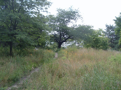 [Photo: black oak savannah in High Park.]