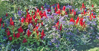 [Photo: Celosia argentea var. plumosa and Heliotropium arborescens planting at the main entrance to High Park.]