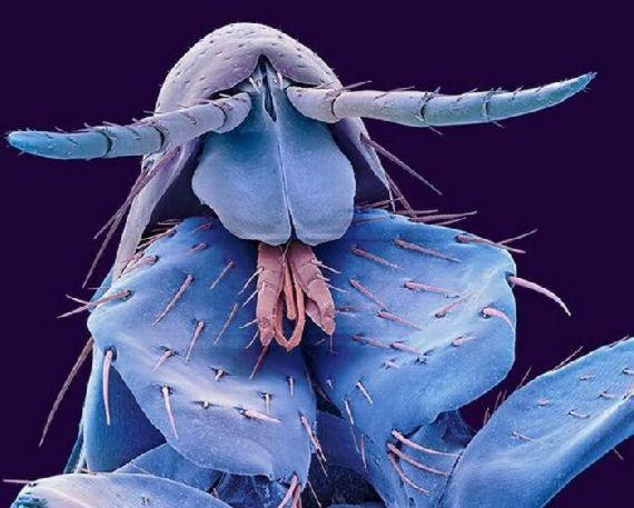 Gambar Foto Serangga