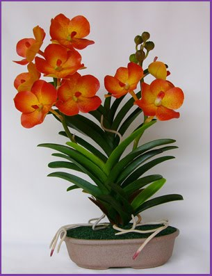 Vanda Orchids Growth