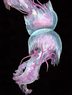 jellyfish... beautiful but deadly