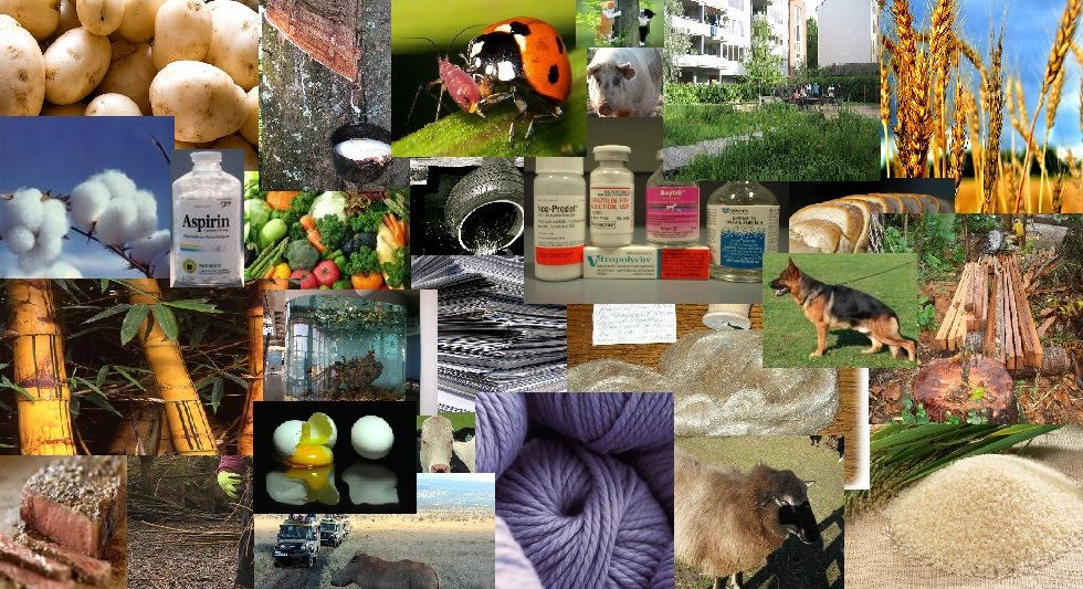 Biodiversity usefulness