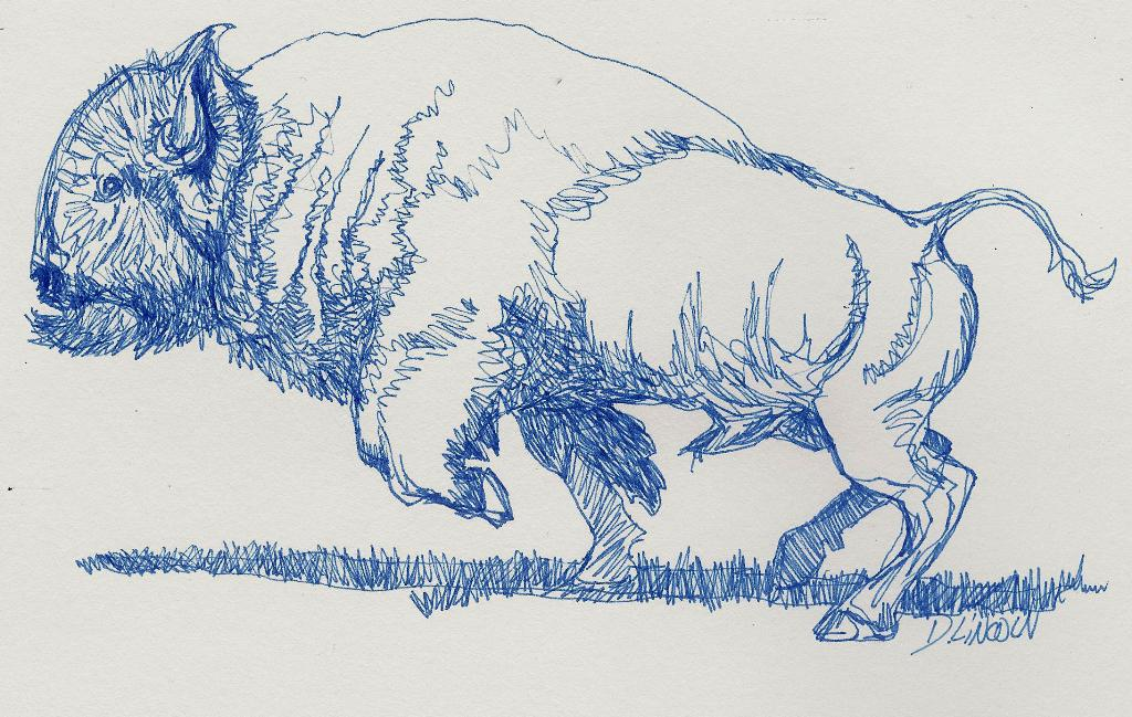 Continuous Line Drawing Of Animals : Now or never sketches buffalo bison continuous line drawing