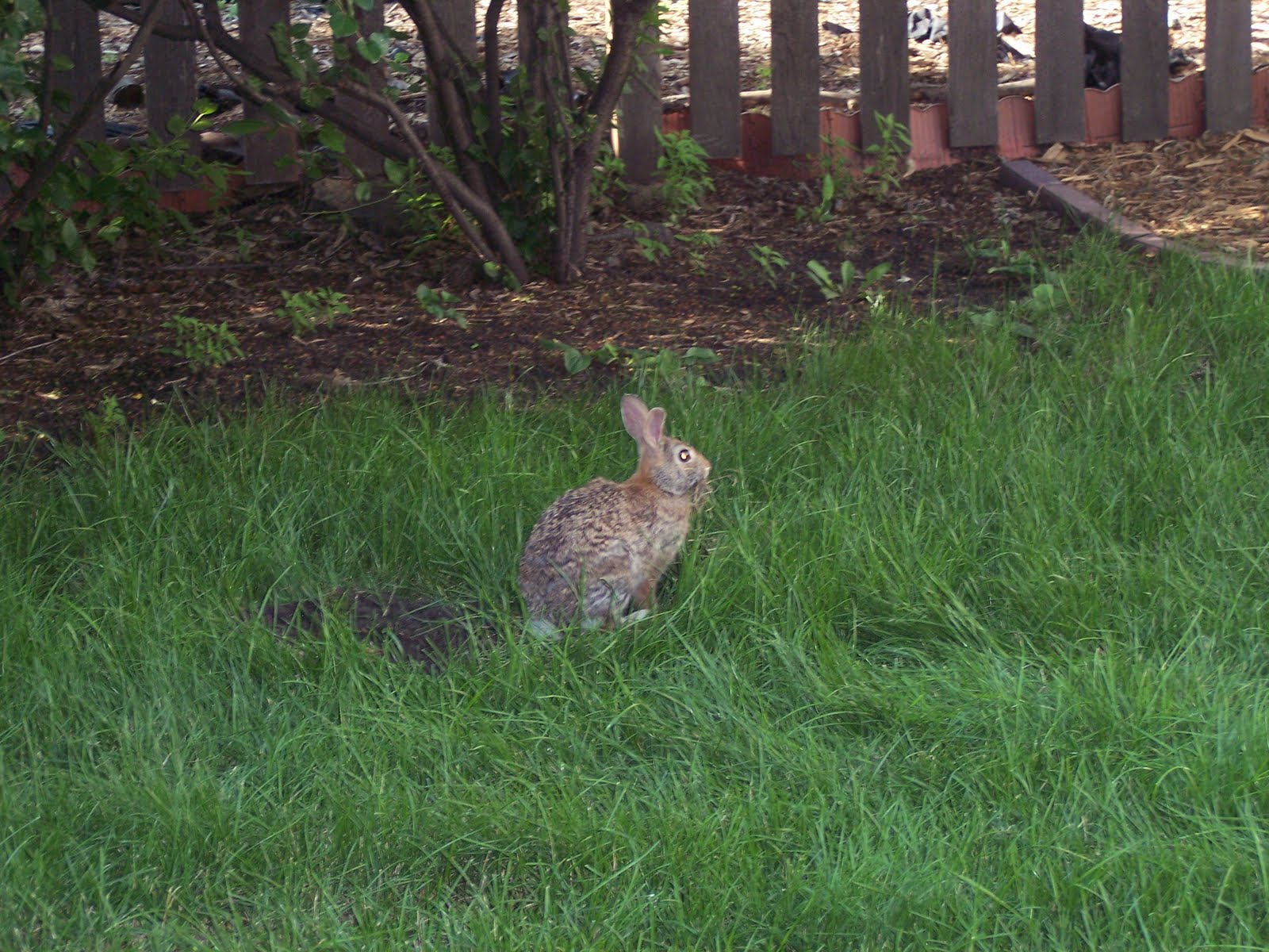 chronicles of a clueless mom backyard wildlife sanctuary
