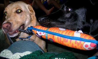 Dog tug