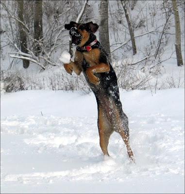 dog leap
