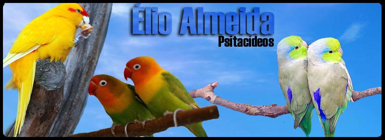 Élio Almeida Psitacídeos