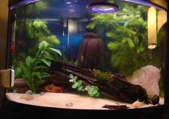 Ornamental fish aquarium selection of fish tanks for How much is a fish tank