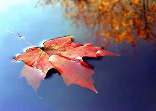 Una hoja flotando sobre el agua
