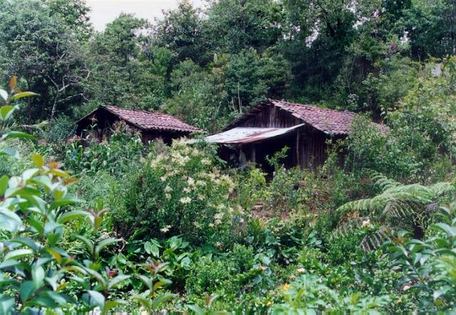 Derrumbe en Chiconcuautla