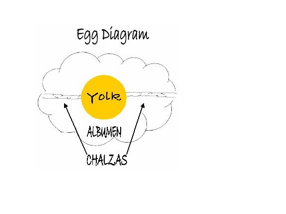 egg diagram psychosynthesis