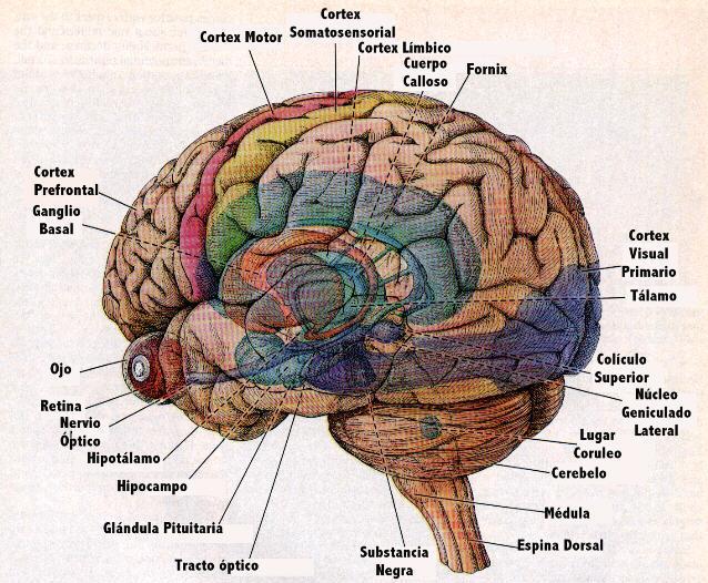 2,1709: El mapa del Cerebro... Segunda Parte
