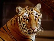 Animalito lindo