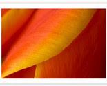 Tulip Wave -$45-