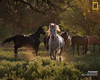 Mustangues - Phantom