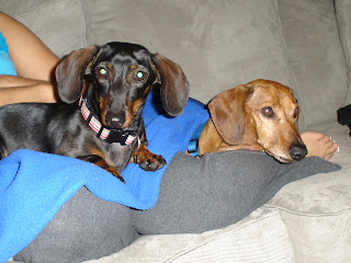 Maggie and Oscar - The Best Dachshunds