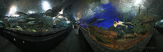 360 panorama from the shark tunnel of the Underwater World in Singapore