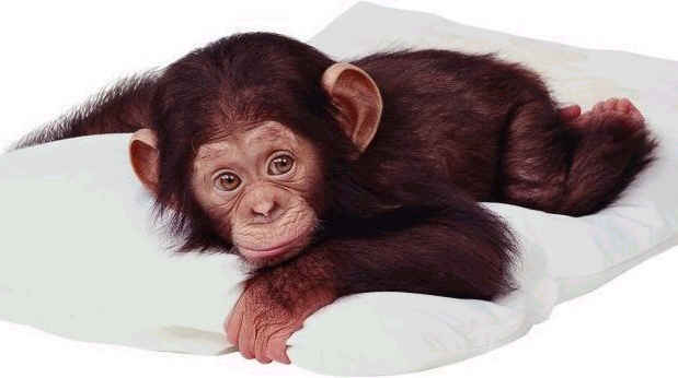 Really cute monkeys pictures - photo#3