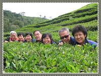 Boh Tea Plantation, Ringlet in Cameron Highlands. From left: Steven, Soke Wan, Soke Hah, Michael, Mary, John and Jacq