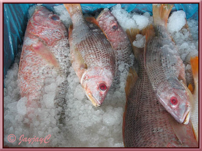 Large fishes for sale at a fish market at Tanjung Sepat, Kuala Langat